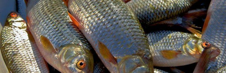 Протягом тижня рівненські рибпатрульні зафіксували 14 порушень правил рибальства