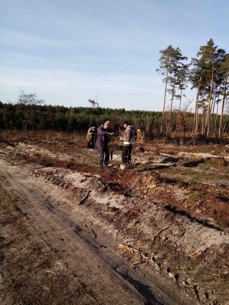 На Жовківщині висадили новий ліс на місці пошкодженого буреломом, – ФОТО