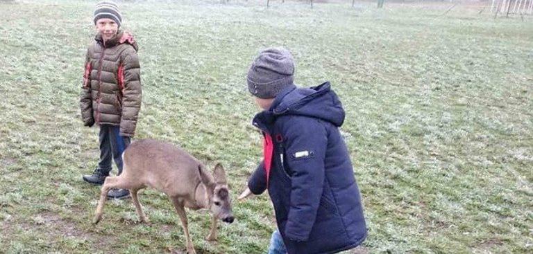 Неожиданный «ученик»: в сельскую школу на Винниччине прибежала ручная косуля. Фото