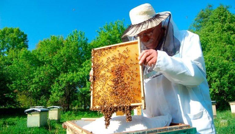 Власникам бджолиних родин на Рівненщині будуть виплачувати гроші