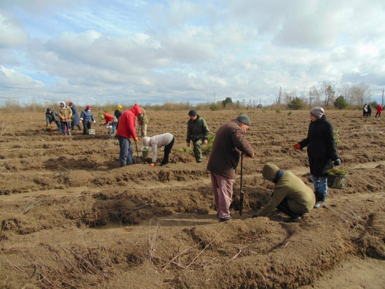 На Рівненщині продовжують висадку дерев: долучилися вчителі з учнями (ФОТО)