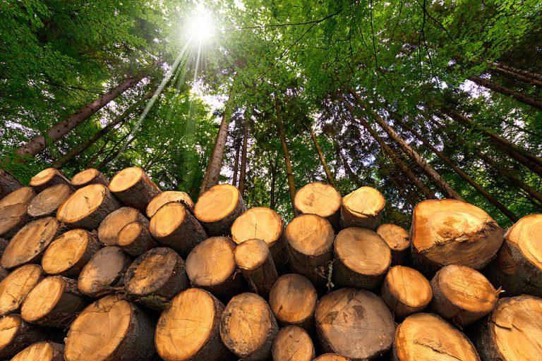 Основные проблемы развития лесной отрасли могут быть решены с помощью IT | Технологии на Рынке ИТ