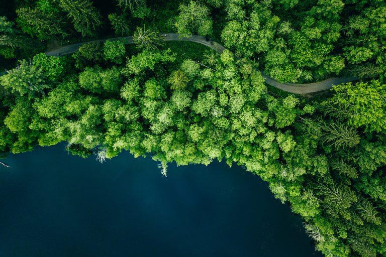Обзор инновационного информационного инструмента для оперативного отслеживания ситуации в лесах приграничного региона России и Финляндии | Технологии на Рынке ИТ