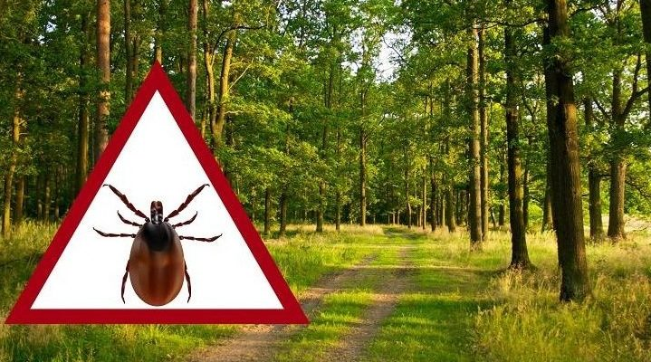 Черкаська лікарка розповіла про небезпечні захворювання, які провокують укуси кліщів, «Міліметрова пошесть»